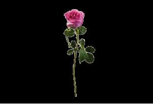 Dirbtinė rožė 68cm