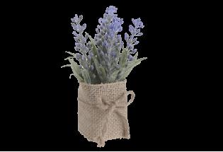 Dibtinė gėlė Lavanda vazonėlyje