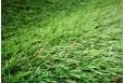 Kiliminė danga Morris 30mm 4m žolė