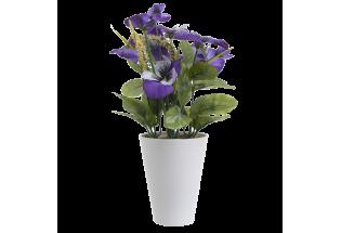 Dibtinė gėlė našlaitė vazonėlyje