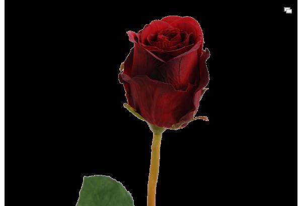 Dirbtinė gėlė rožė