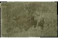 Vonios kilimėlis Bamboo 50*80sage green